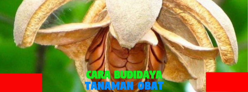Cara Budidaya TanamanObat