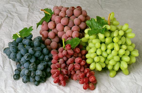 Inilah Manfaat Anggur UntukTubuh