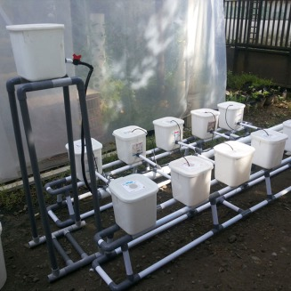 MOdul-Hidroponik-DUtch-Bucket-10-Bucket-2