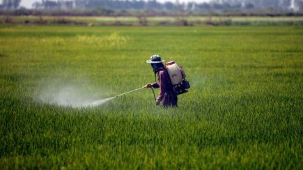 Dampak Pestisida Kimia
