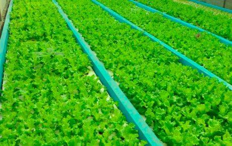 Bioteknologi Sistem Pertanian